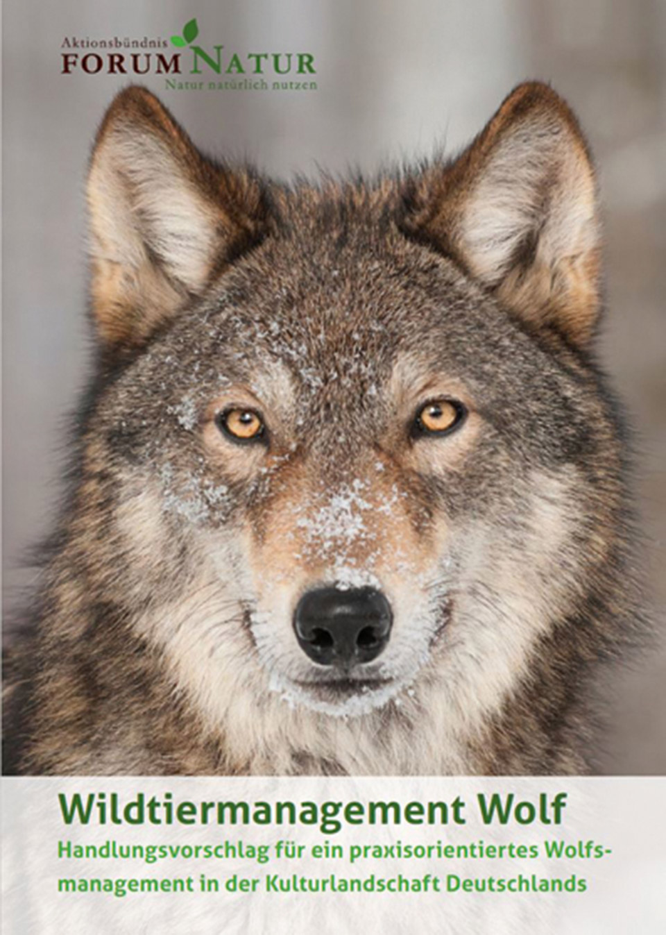 cover afn wolf id111448