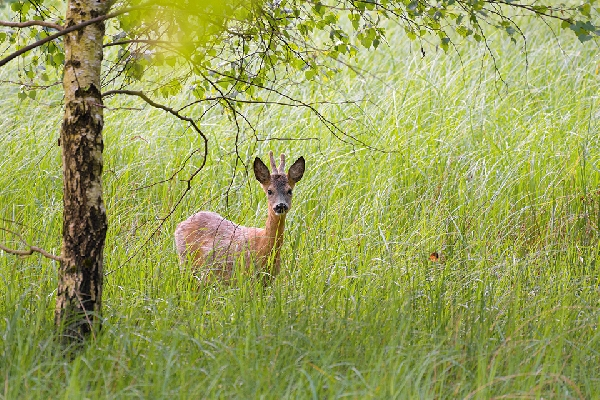 leserbriefe rehe m.breuer 3 id144431